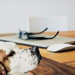 Blog - Canine Caviar Pet Foods Inc.