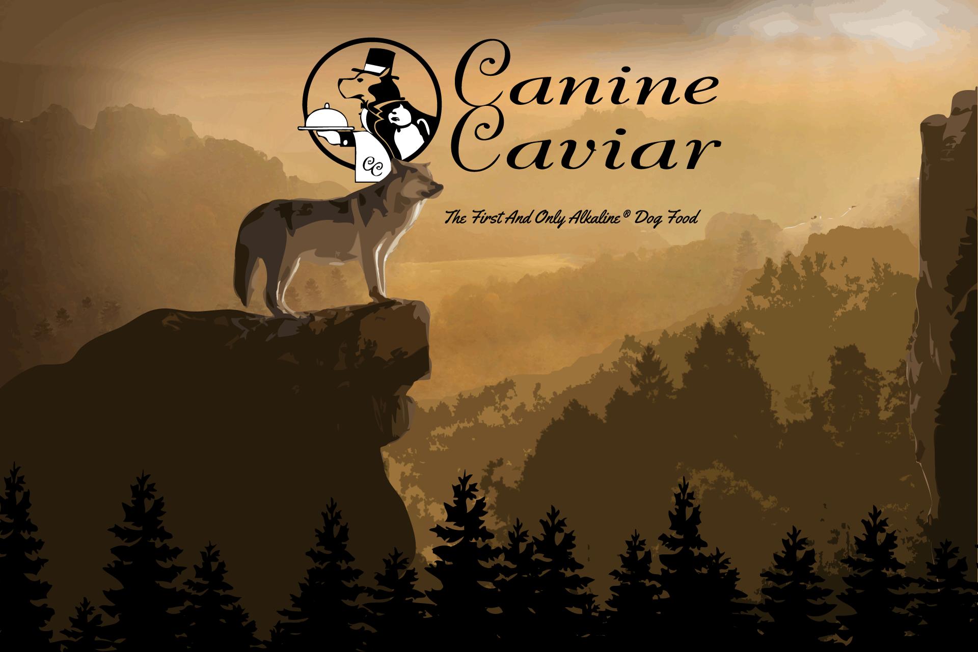 Canine Caviar Banner